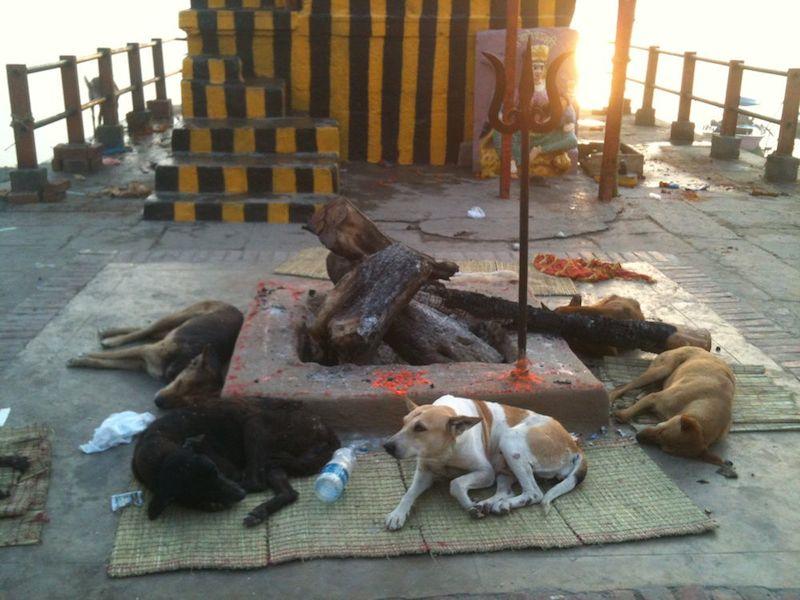 A stray dog in Varanasi, India