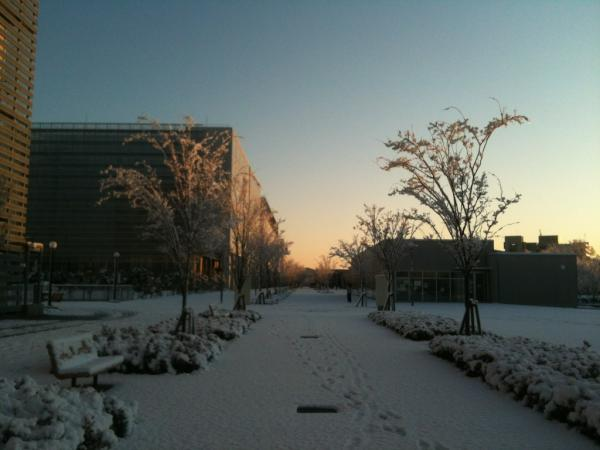 A snow day in Kashiwa Campus, the University of Tokyo