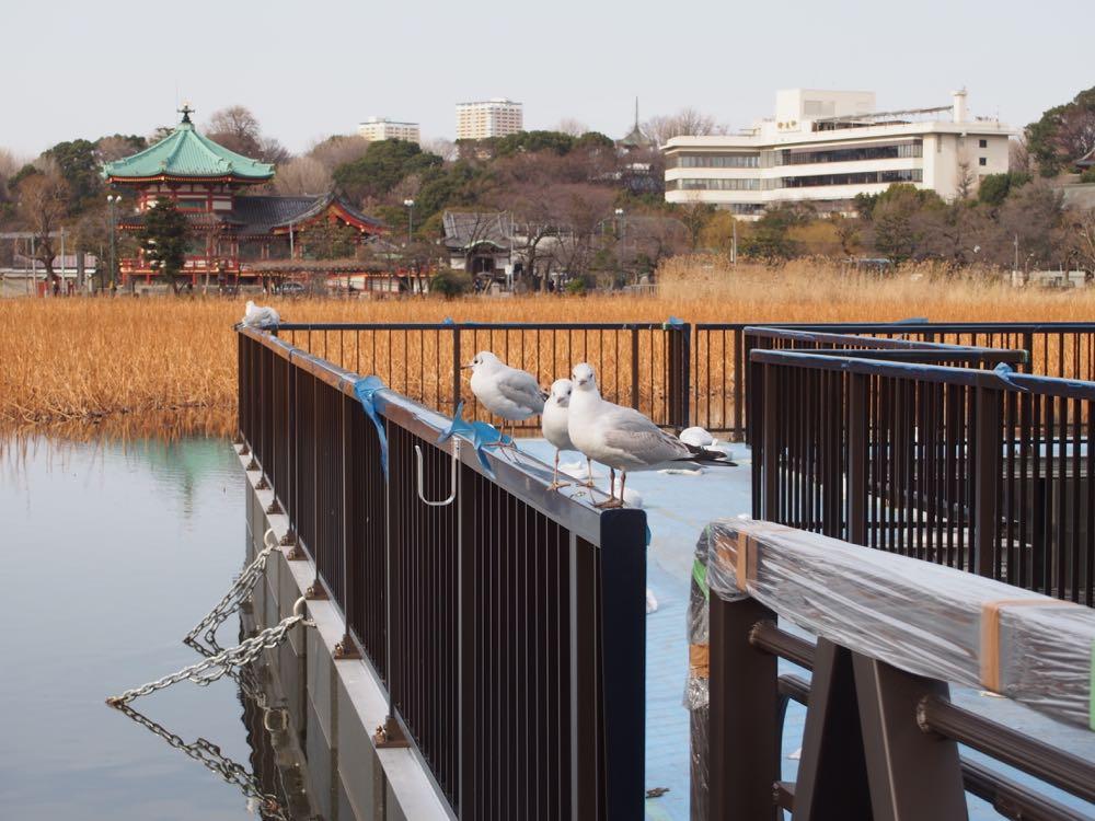 Peaceful Shinobazu-no-ike Pond